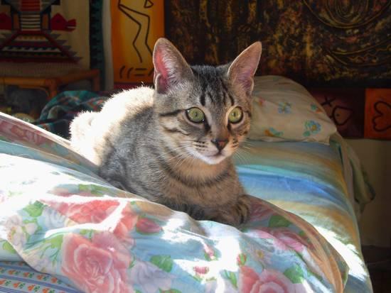 Achille vive con noi dal 7 dicembre, aveva 2 mesi, uno scricciolo dolcissimo...