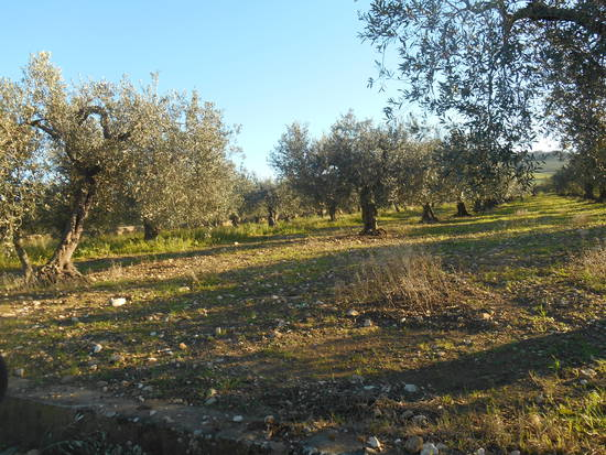 Sicilia occidentale, terra, mare, natura e cultura - Pagina 25 B3cadc3d32_7822924_med