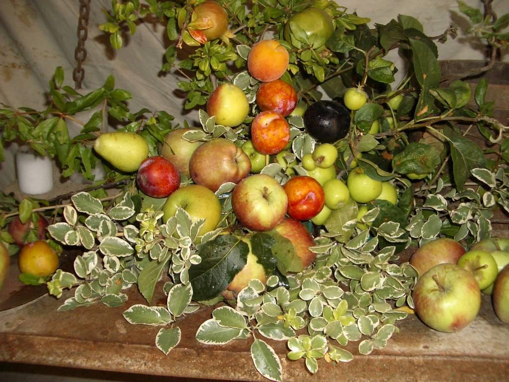 I buoni...frutti