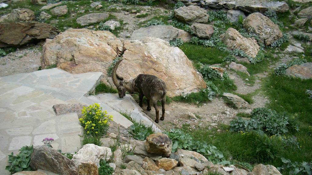 Alpi Marittime - Arrampicate in Valle Gesso (Piemonte - CN) Eb64049e41_6358971_lrg