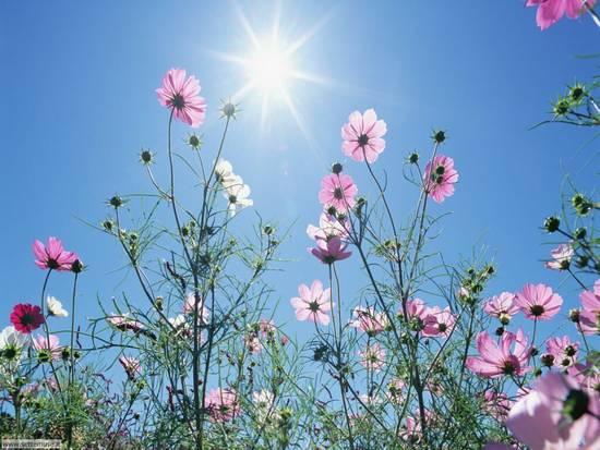 Foto fiori primaverili dall 39 album foto profilo di urasina - Fiori primaverili ...
