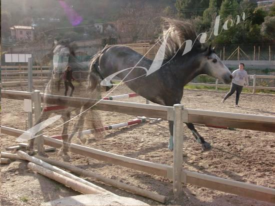 Cavalli x