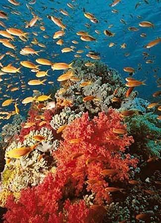 fondo-marino-de-palma-de-mallo